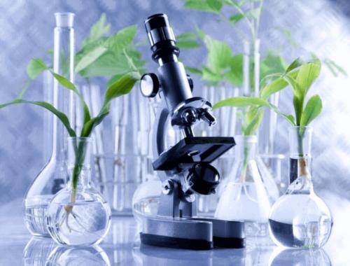 Растительные стволовые клетки