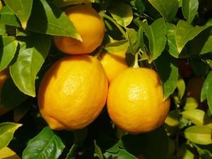 Опасные натуральные отдушки, эфирные масла, польза и вред косметики, масло лимона